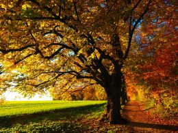 fall-foliage_1_